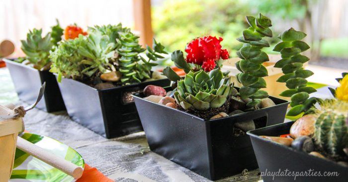 A long and low centerpiece of small black boxes filled with succulents.