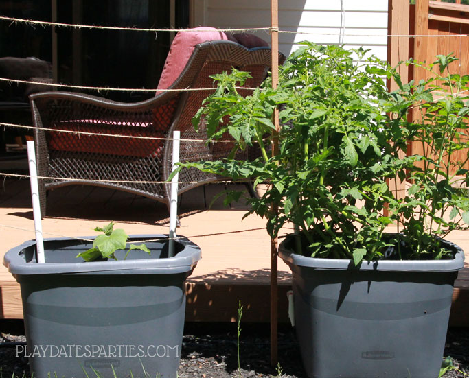Two DIY self watering planters with a twine trellis.