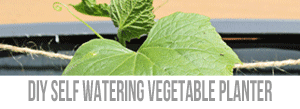 DIY-Self-Watering-Planter