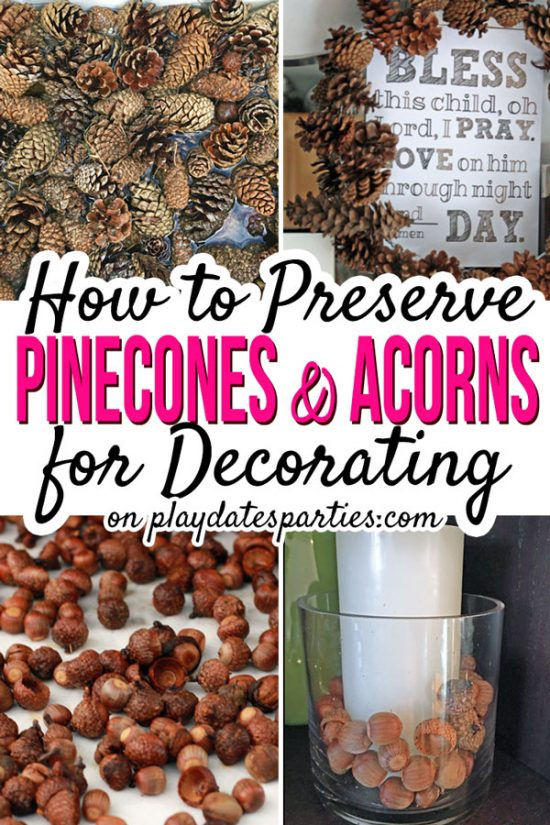 Wanting to try your hand at adorable fall and Christmas decorations made with dry pinecones? Learn how to preserve pinecones and acorns that you gather right in your own backyard! With dry acorns and pinecones the DIY and crafts options are endless! #pineconecrafts #acorncrafts #pinecone #fall #doityourself #howto #fallcrafts