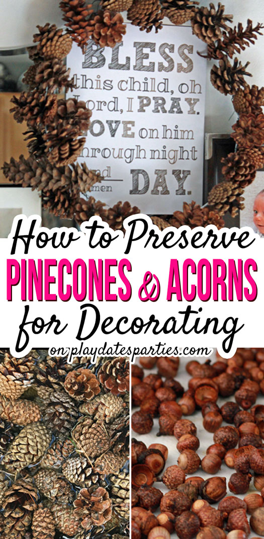 Rustic acorn and pinecone decor are an easy and inexpensive way to decorate your home for fall. Make sure your crafts stay mold free for months with this DIY tutorial for how to preserve pinecones and acorns by cleaning them and making sure they are perfectly dry. #pineconecrafts #acorncrafts #falldecor #DIY #diyhomedecor #fallhomedecor #fallcrafts